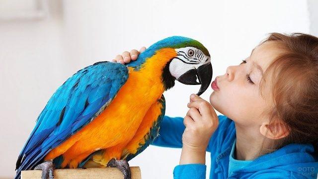 Девочка целует попугая