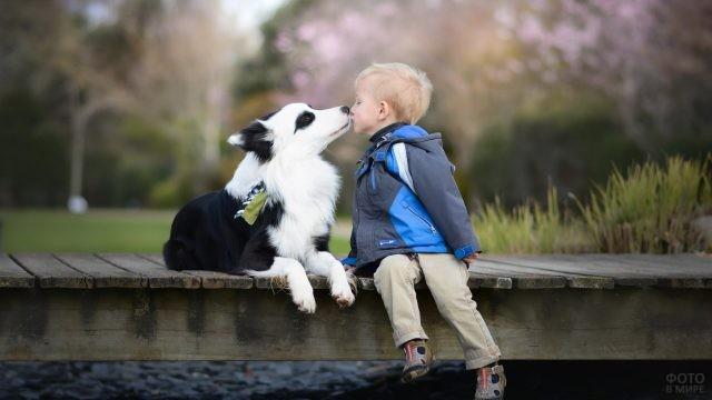 Мальчик целует собачку