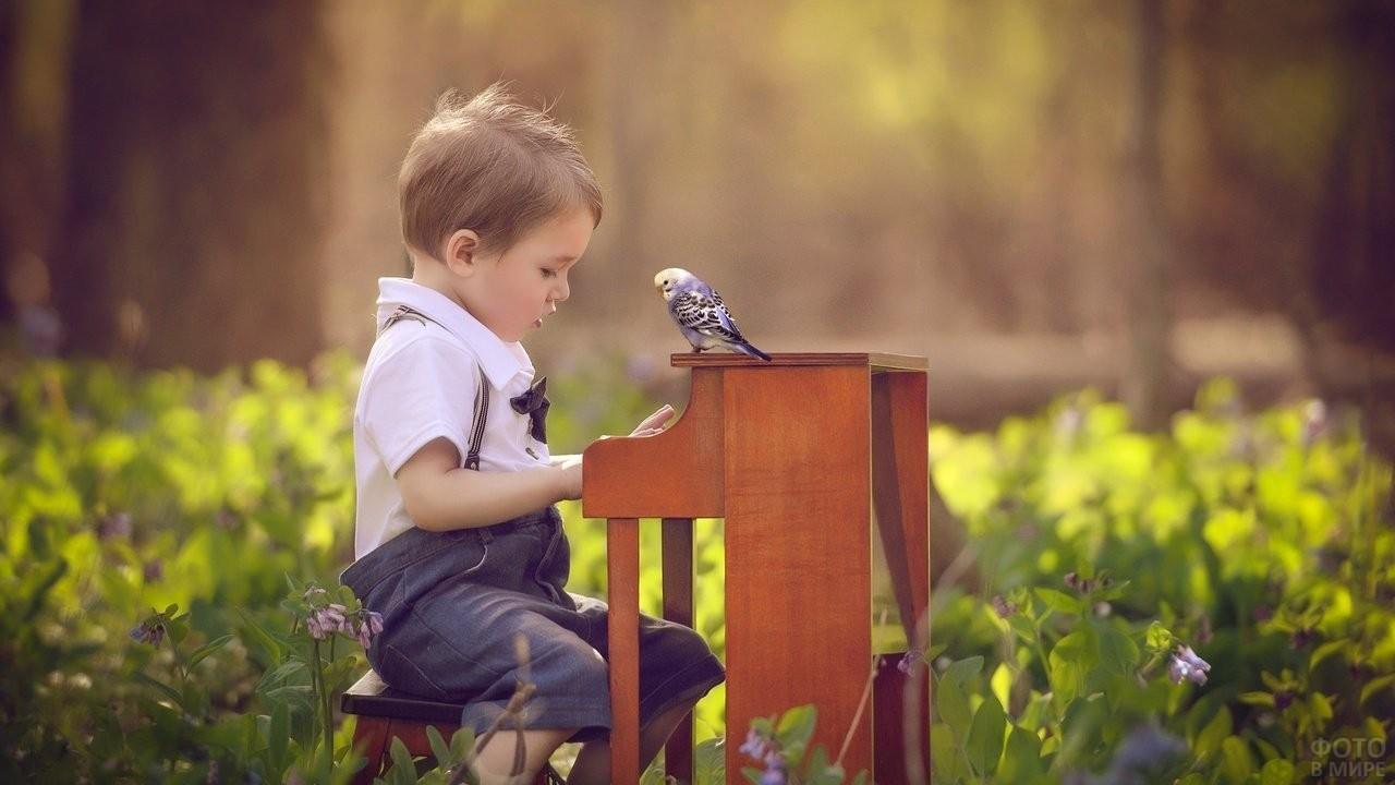 Мальчик с попугайчиком на лужайке играет на детском пианино