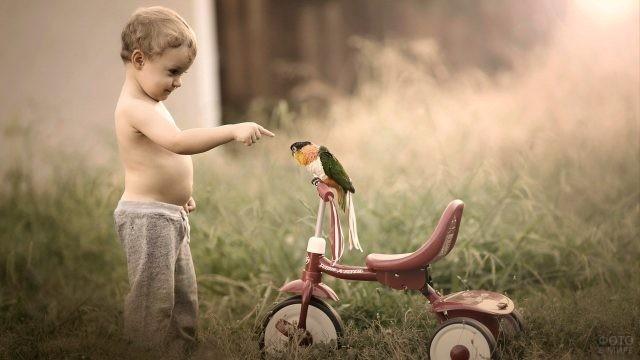Мальчик смотрит на попугая, сидящего на велосипеде