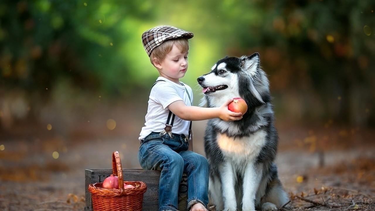 Мальчик в лесу угощает собаку яблоком