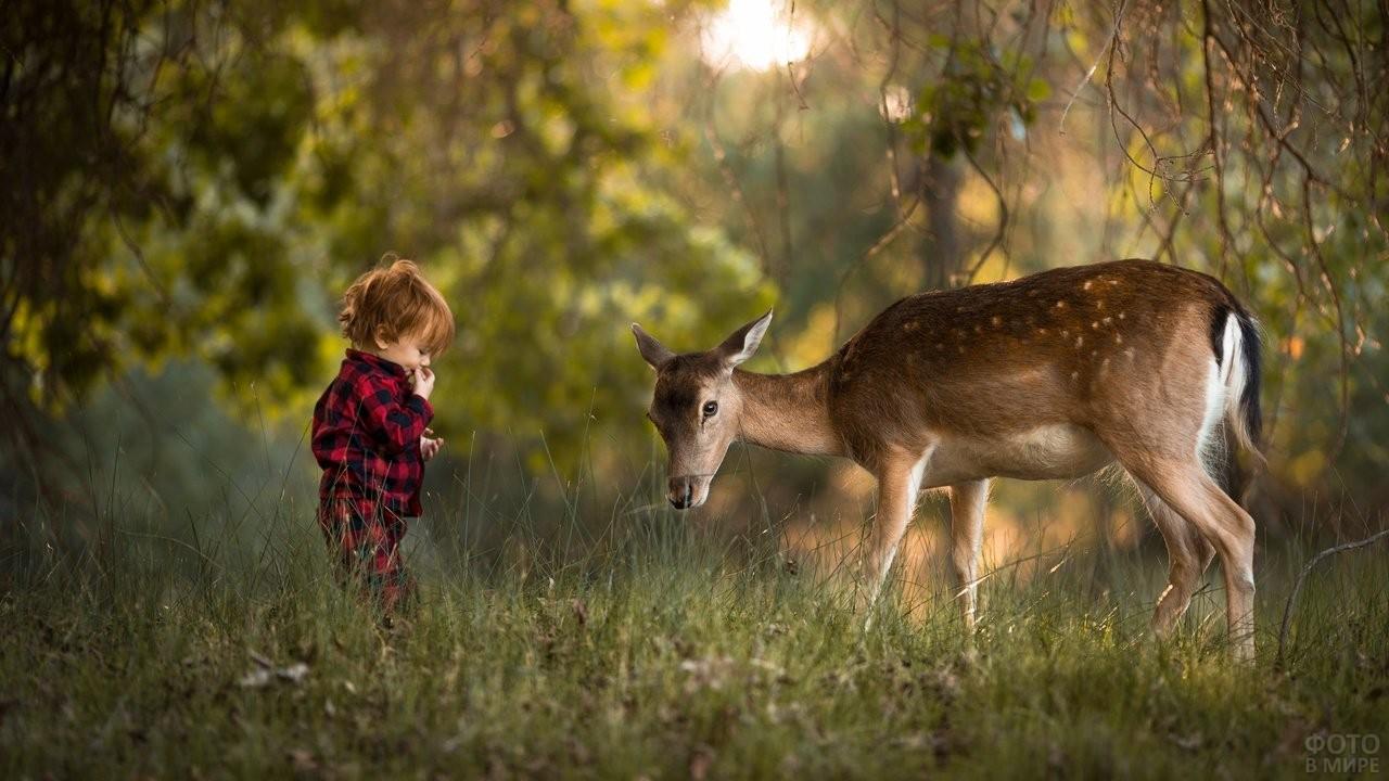 Мальчик встретил в лесу оленёнка