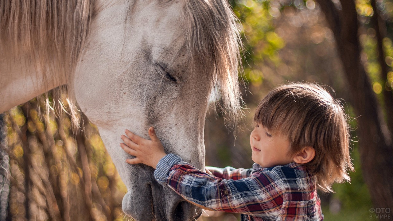 Малыш гладит лошадку
