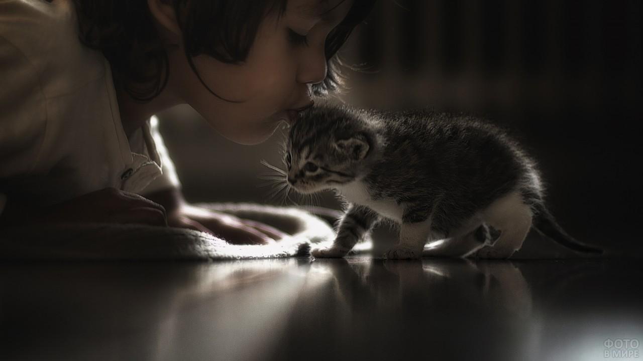Ребёнок целует котёнка