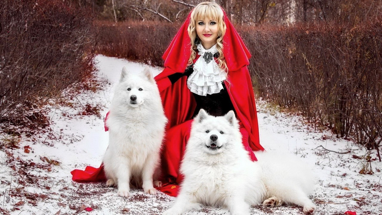 Девушка в красном с двумя самоедскими лайками на природе