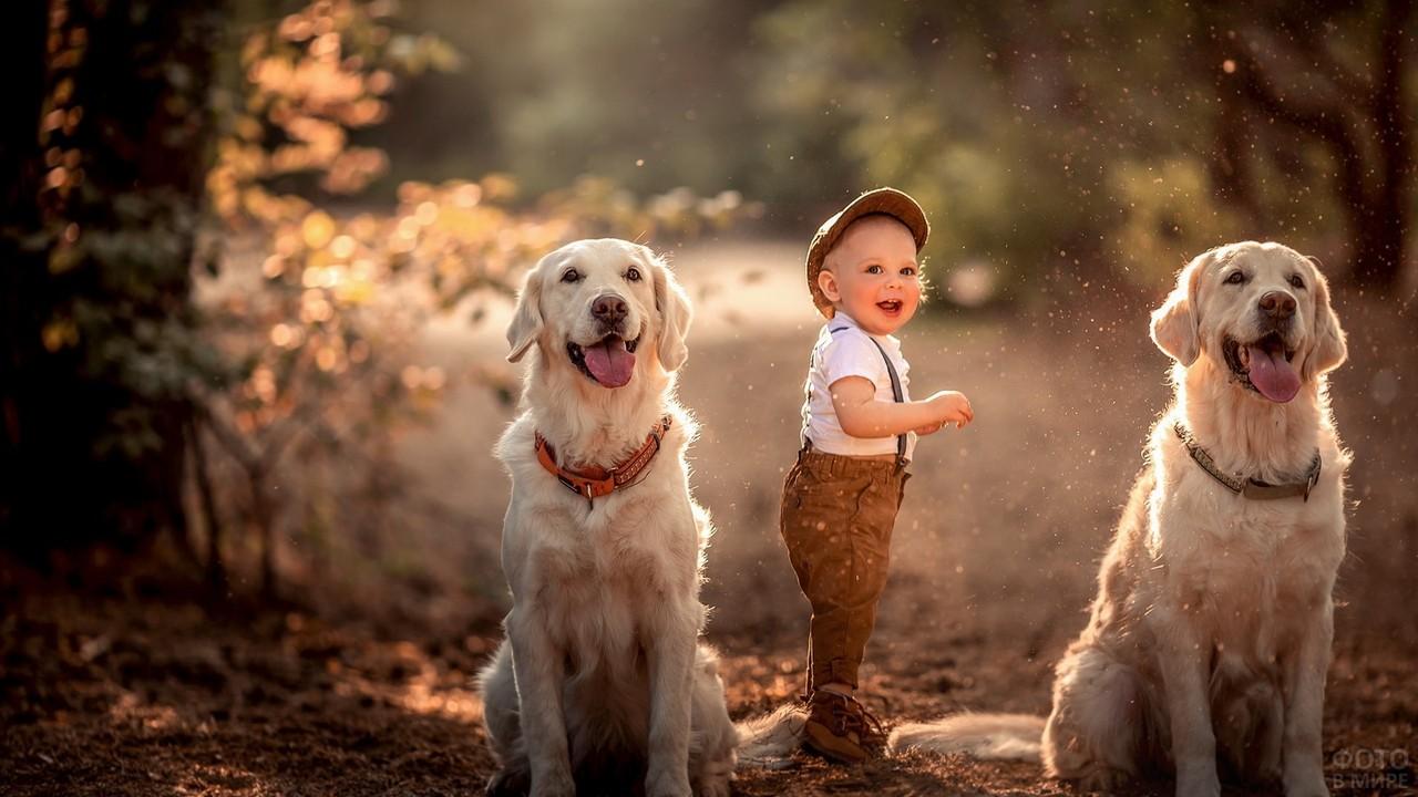 Мальчик в кепке с двумя белыми псами в лесу