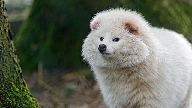 Собака внимательно смотрит в сторону