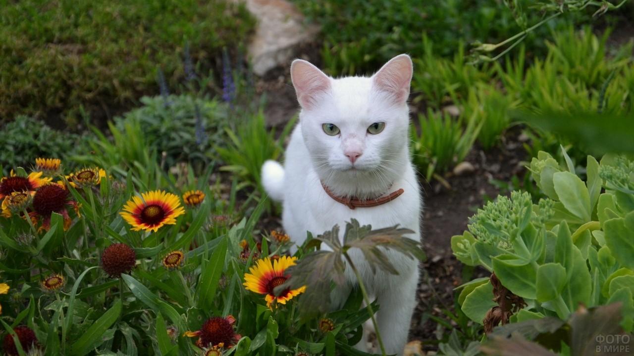 Белая кошка с ошейником среди цветов