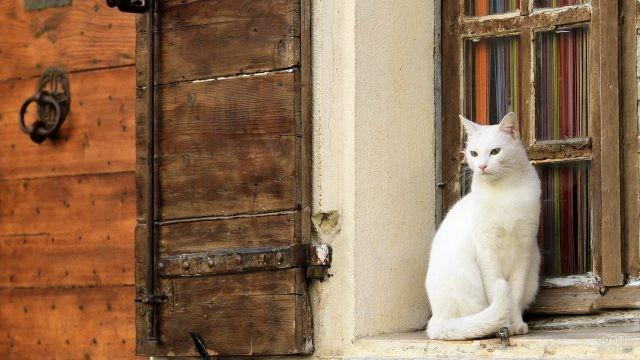 Белая кошка у окна старого дома