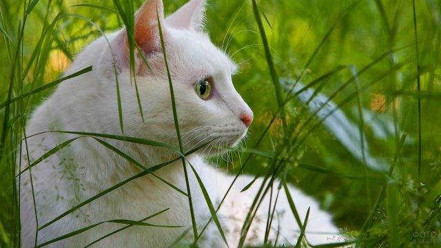 Белая кошка в зелёной траве