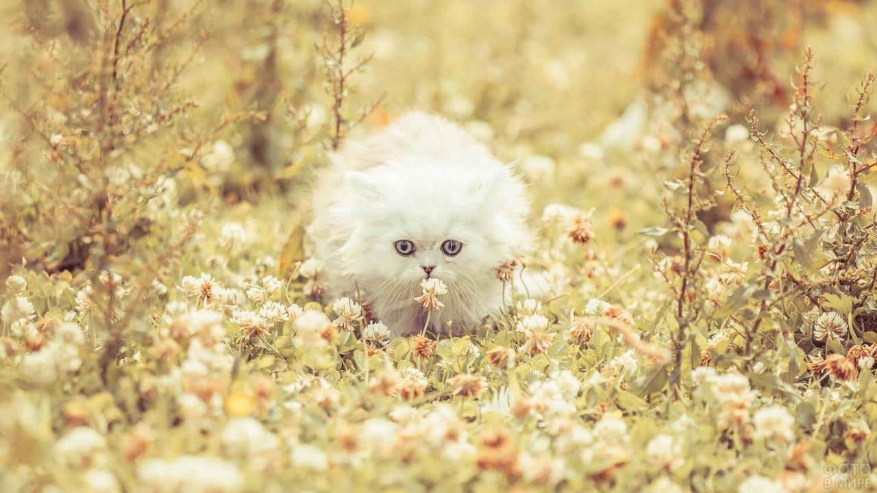 Белая пушистая кошка притаилась в цветах