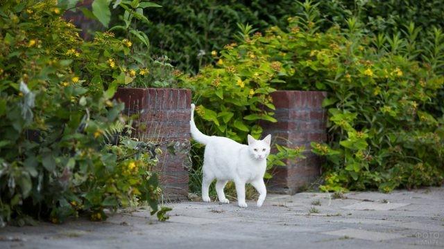 Белый кот гуляет по саду