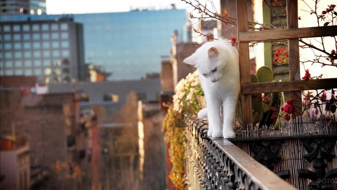 Белый котик гуляет по перилам балкона многоэтажного дома