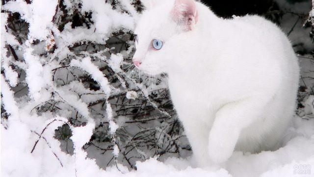 Белый котёнок зимой на снегу