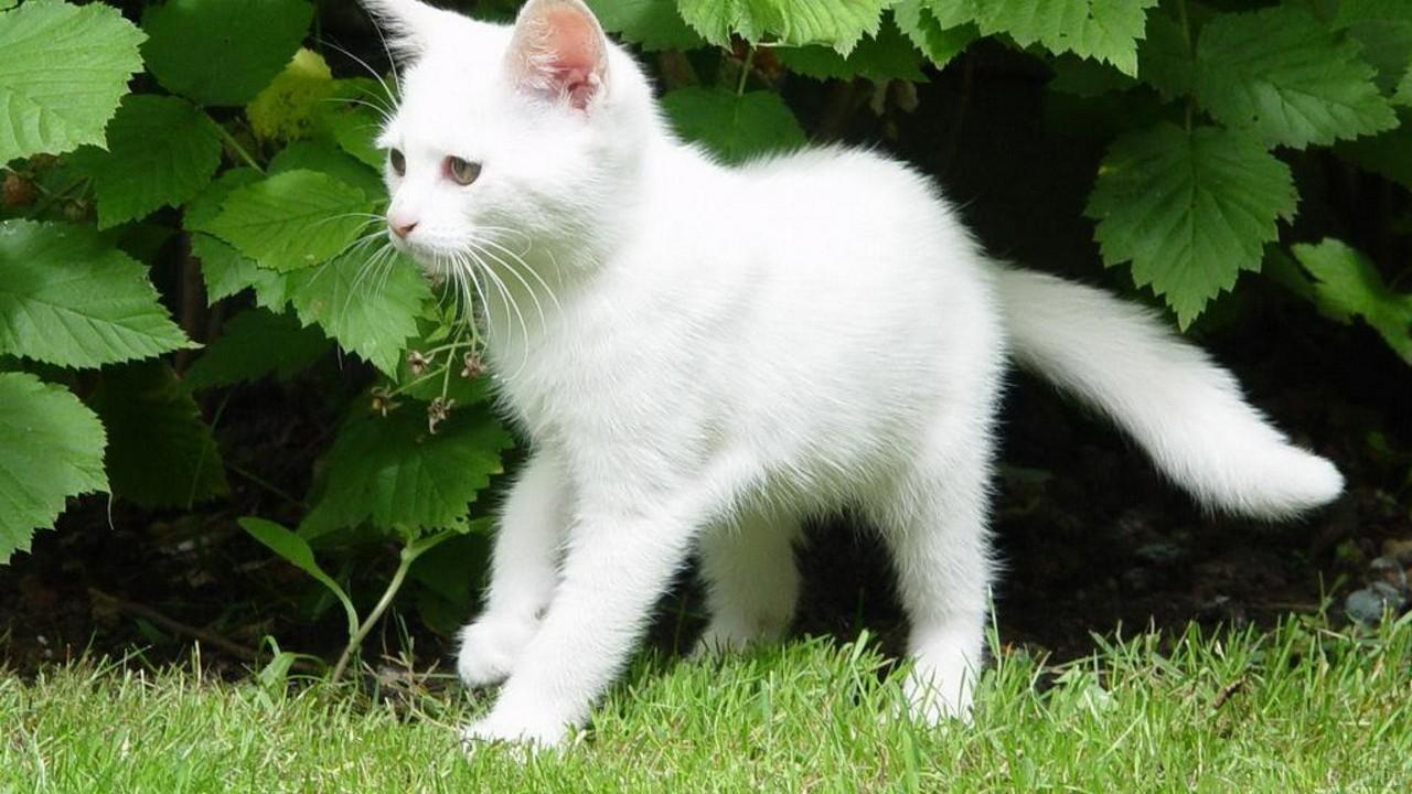 Белый молодой котик гуляет в саду