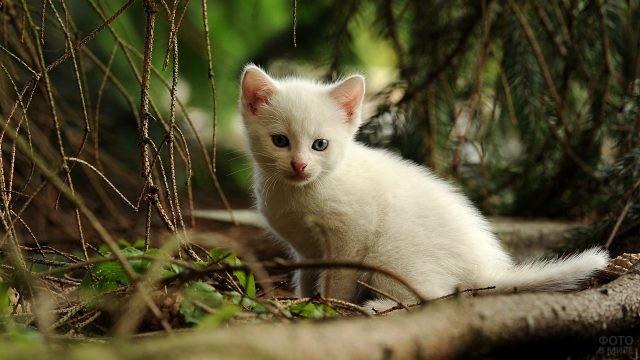Одинокий белый котёнок в лесу