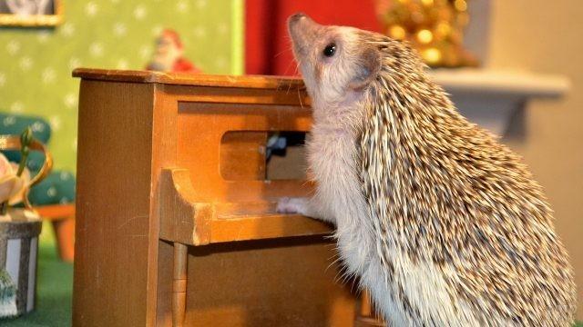 Ёжик и детское пианино