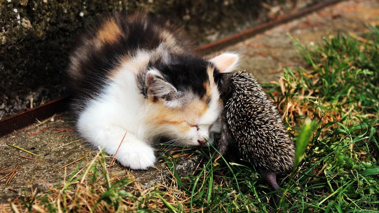 Ёжик с котёнком