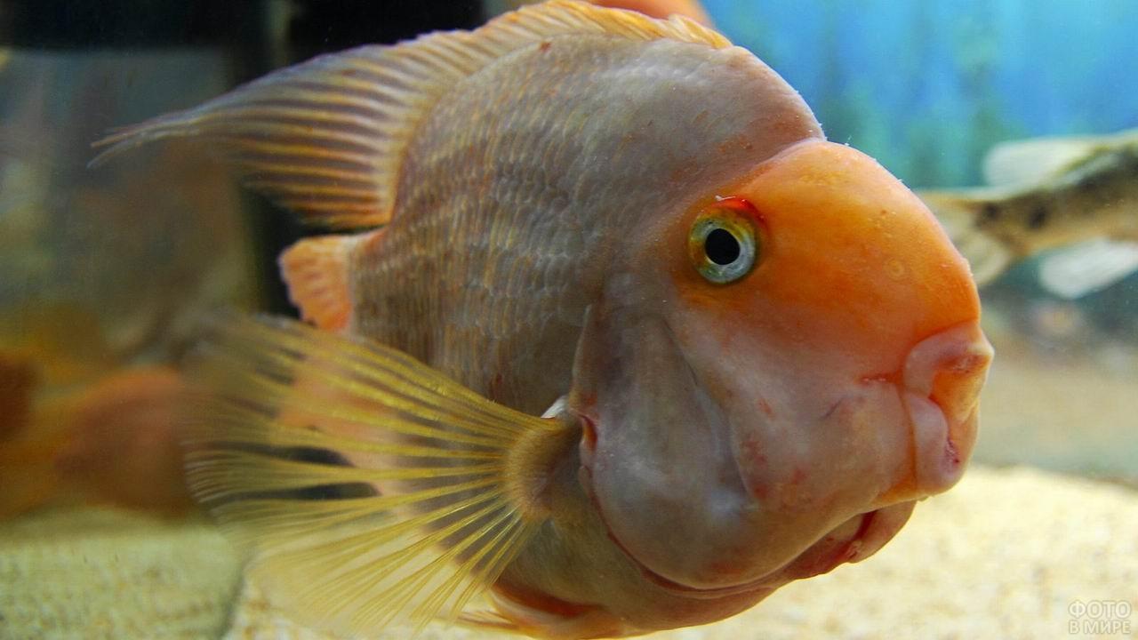 Рыба-попугай круным планом