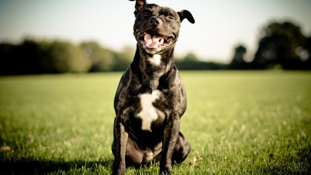Довольный пёс отдыхает на траве