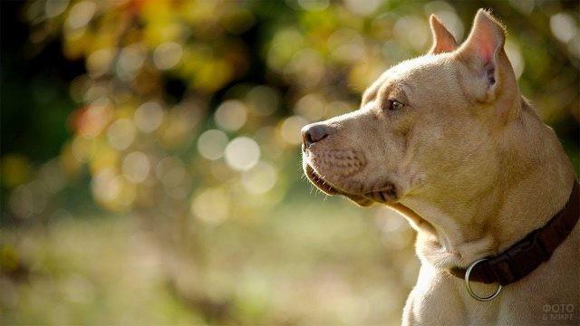 Пёс смотрит вдаль внимательным взглядом