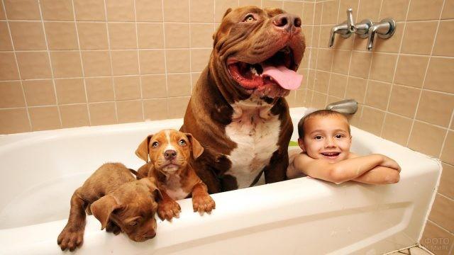 Ребёнок, питбуль и два щенка принимают ванну