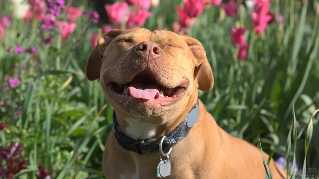 Счастливый пёс на цветочной клумбе