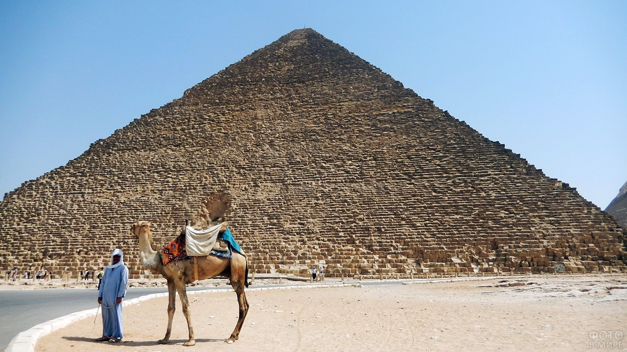 Египтянин с верблюдом на фоне пирамиды Хеопса