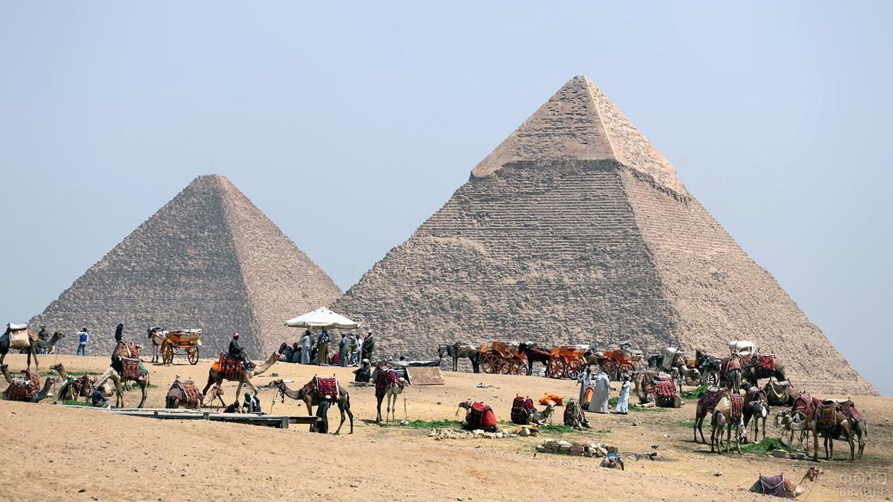Гужевой транспорт для туристических прогулок у пирамиды Хеопса