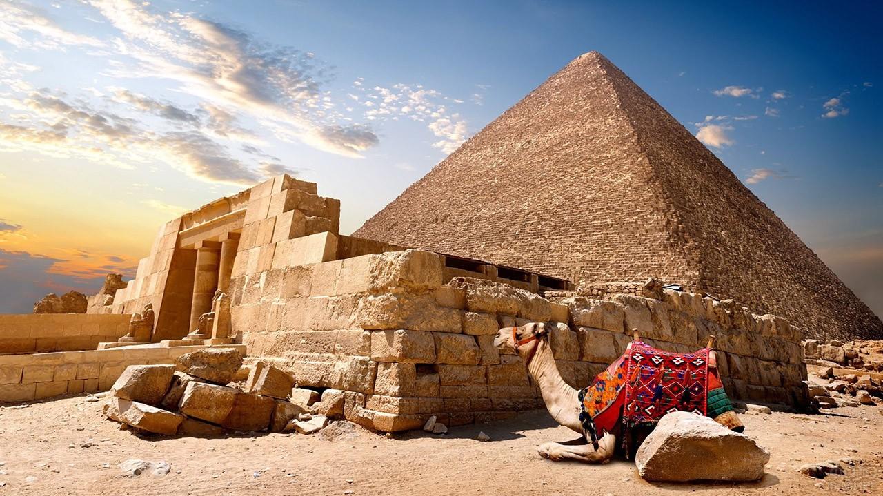 Верблюд лежит у входа в пирамиду Хеопса