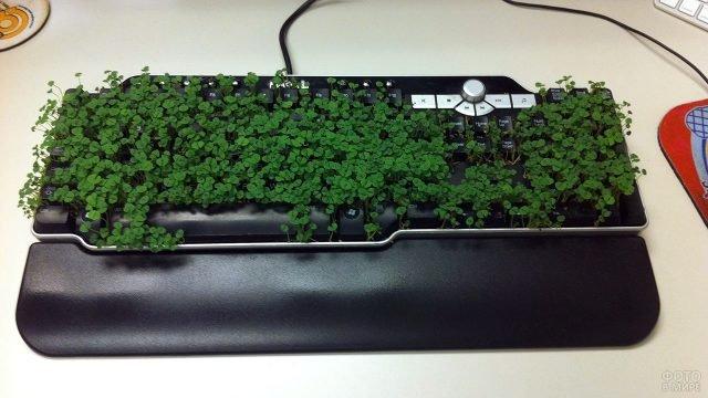 Пророщенная клавиатура коллеги к 1 апреля