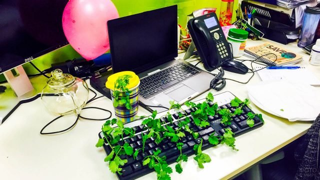Розыгрыш коллеги с пророщенной клавиатурой на 1 апреля