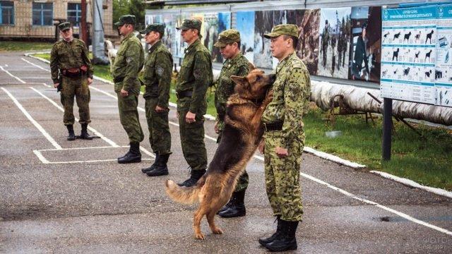 Тренировка пограничной собаки в военной части в Амурской области