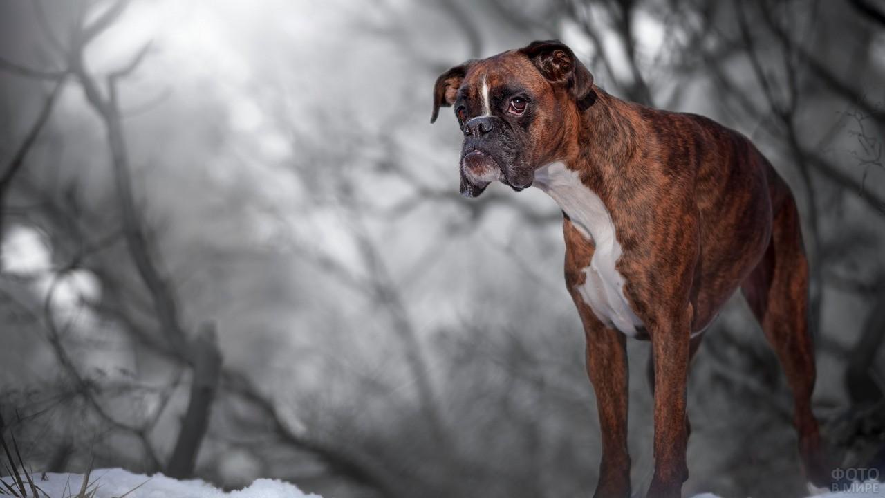Пёс на зимней прогулке в лесу