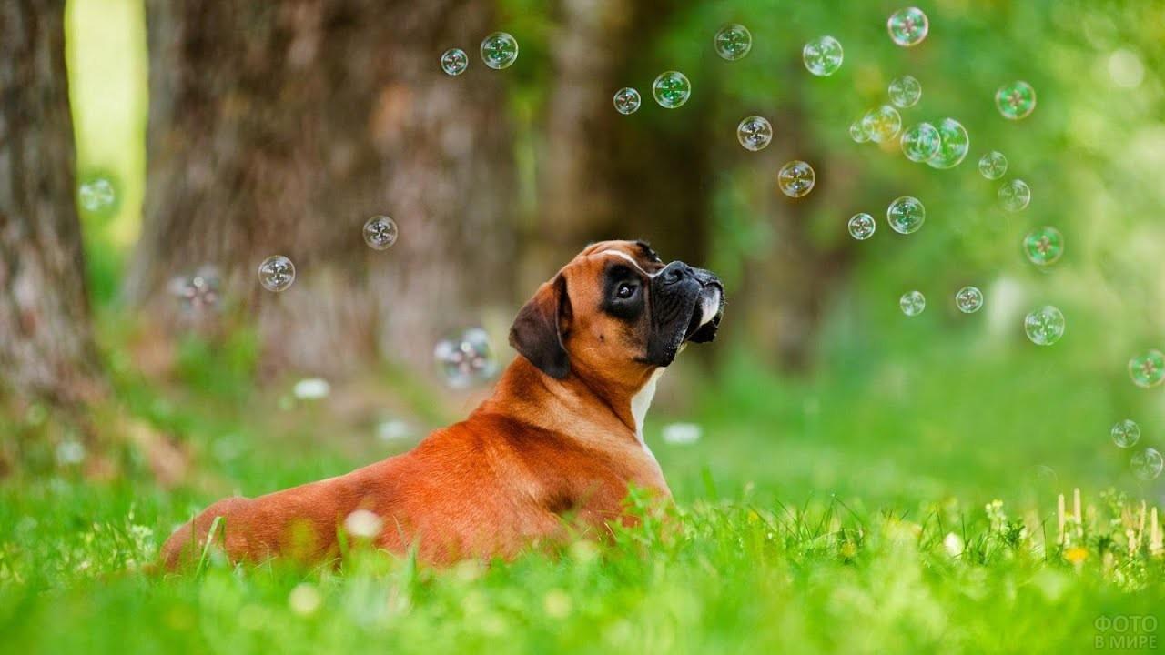 Собака рассматривает мыльные пузыри