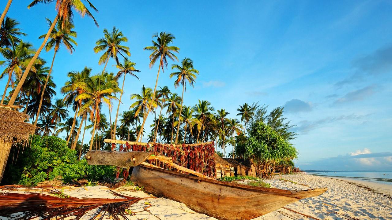 Лодка под пальмами на пляже Занзибара