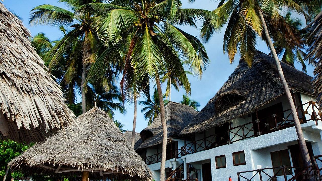 Пальмы над крышами бунгало на Занзибаре