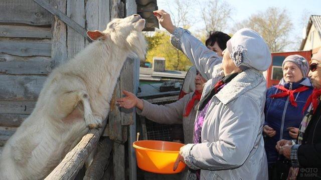 Пенсионерки в свой праздник веселятся в контактном зоопарке