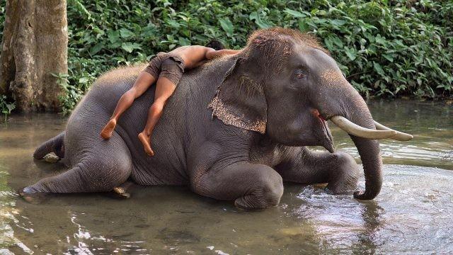 Человек лежит на Тайском слонике