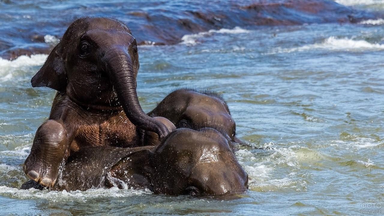 Дикие слоны купаются в воде