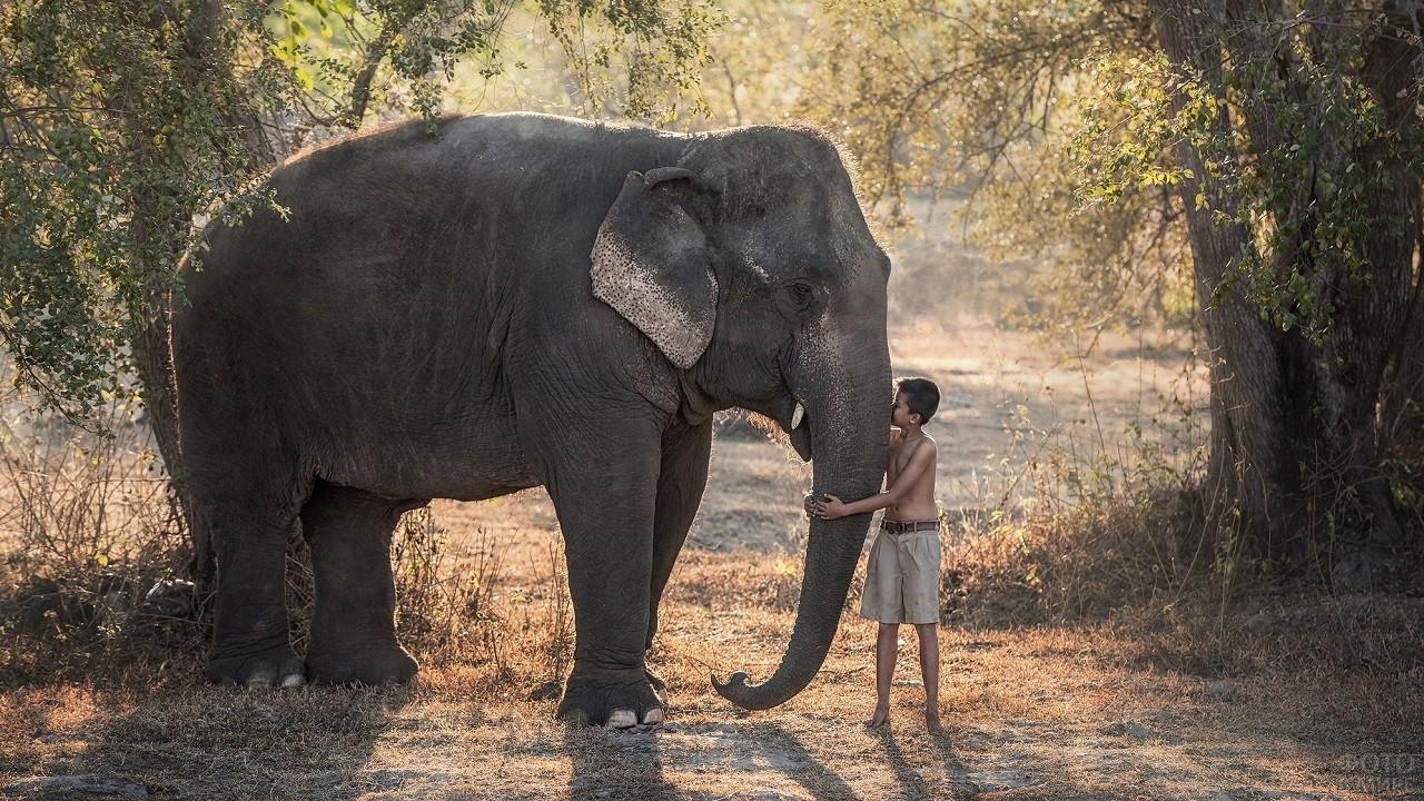 Мальчик обнимает за хобот большого слона