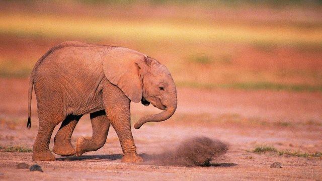 Маленький слоник идёт по песку