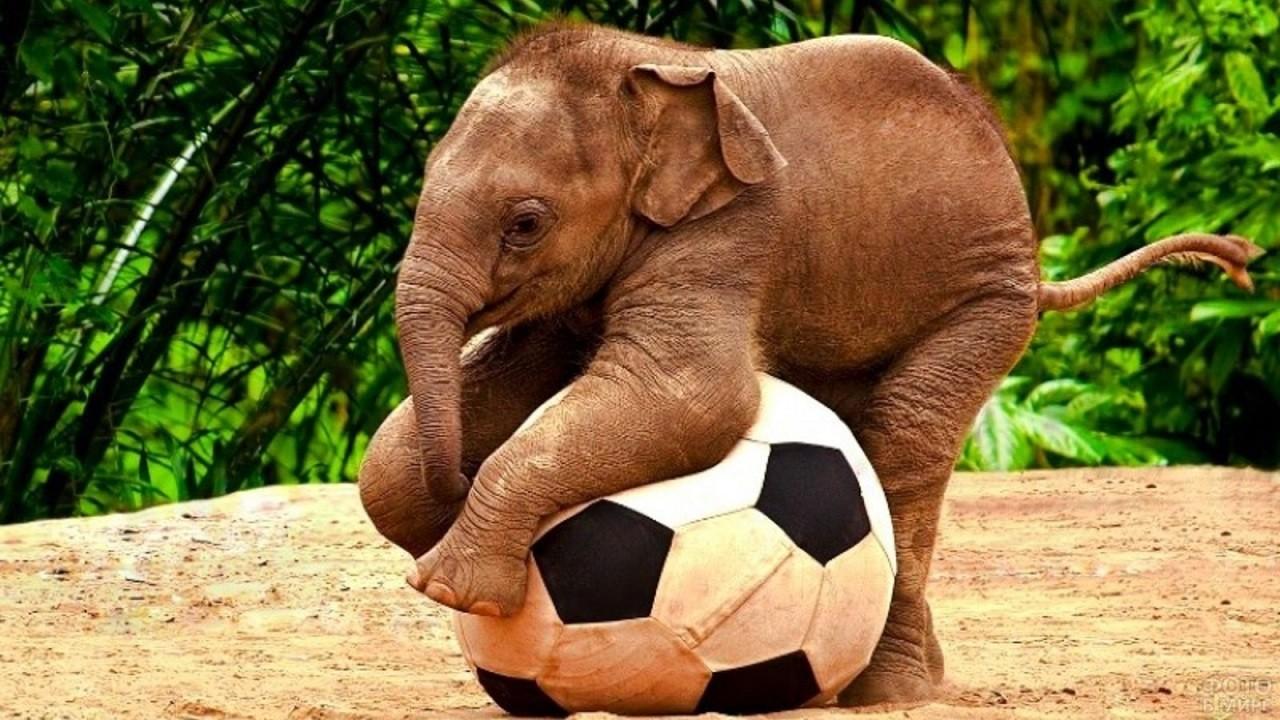 Маленький слоник играет с мячом