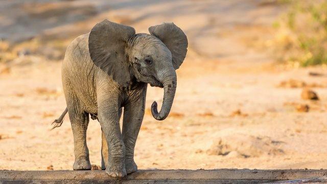 Маленький слоник стоит, оттопырив ушки