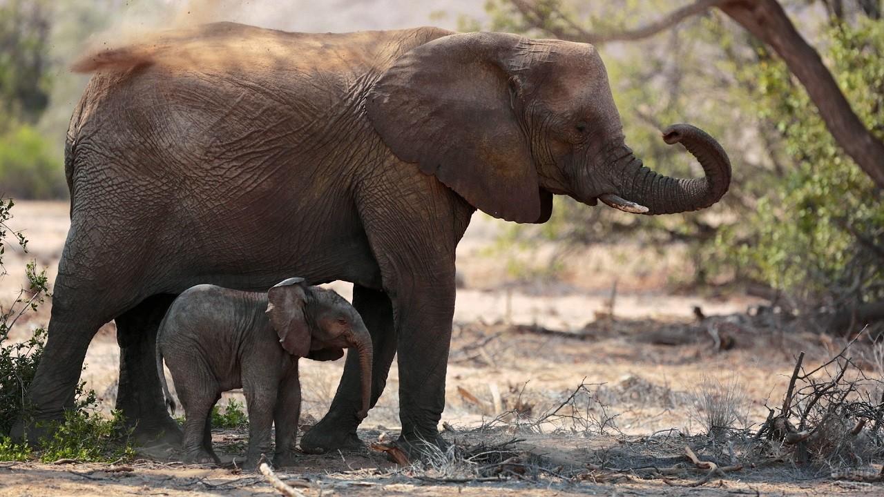 Мама со слонёнком гуляют по природе