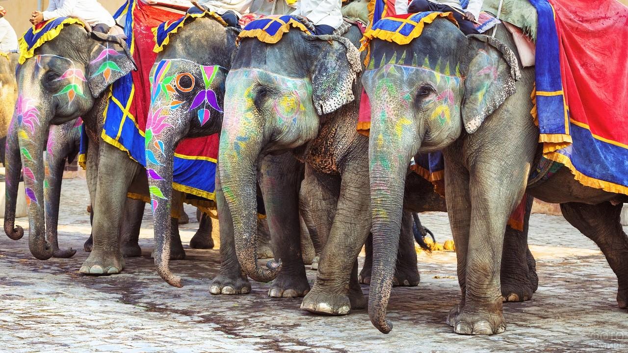 Разукрашенные Индийские слоны