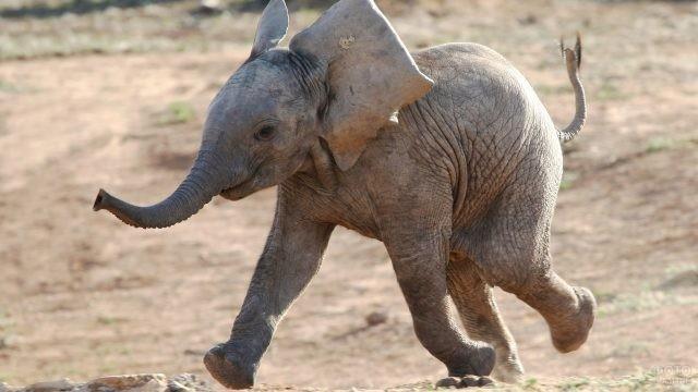 Смешной слоник весело бежит, подняв хвостик
