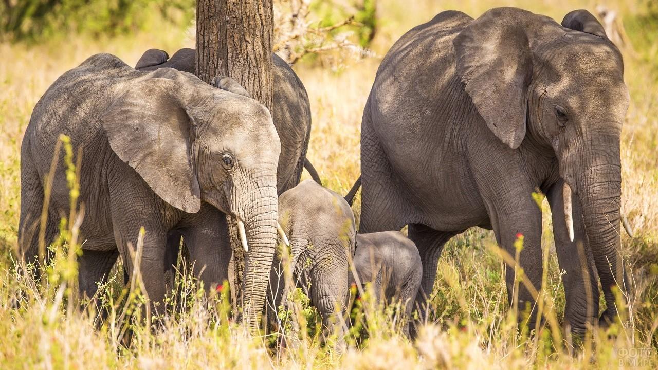 Стадо слонов посреди дикой природы