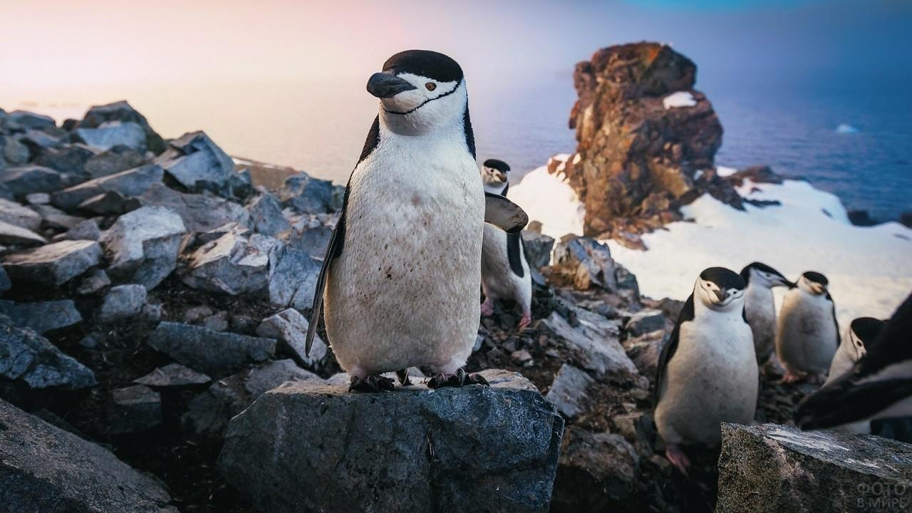 Милые пингвины стоят на скалистом обрыве