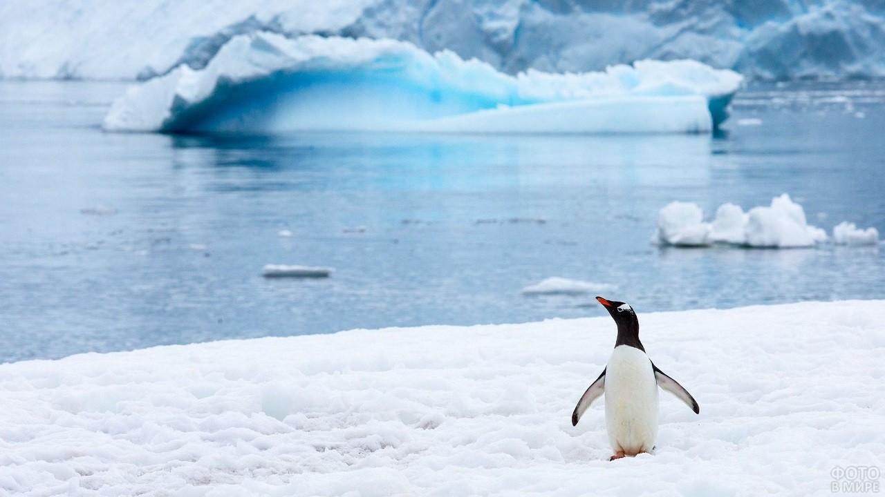 Одинокий пингвин стоит на фоне красивого пейзажа Антарктики